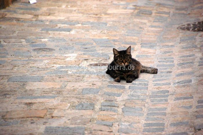 Chillige Katze