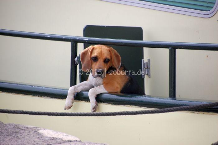 Bordhund