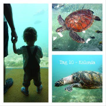 La Réunion – Tag 10│ Zu Besuch bei den Dinos der Meere