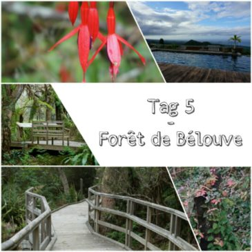 La Réunion – Tag 5│Von mächtige Tamarinden und vernebelten Aussichten